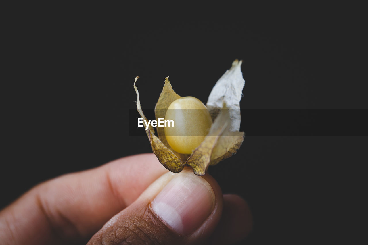 Close-Up Of Hand Holding Fruit Against Black Background