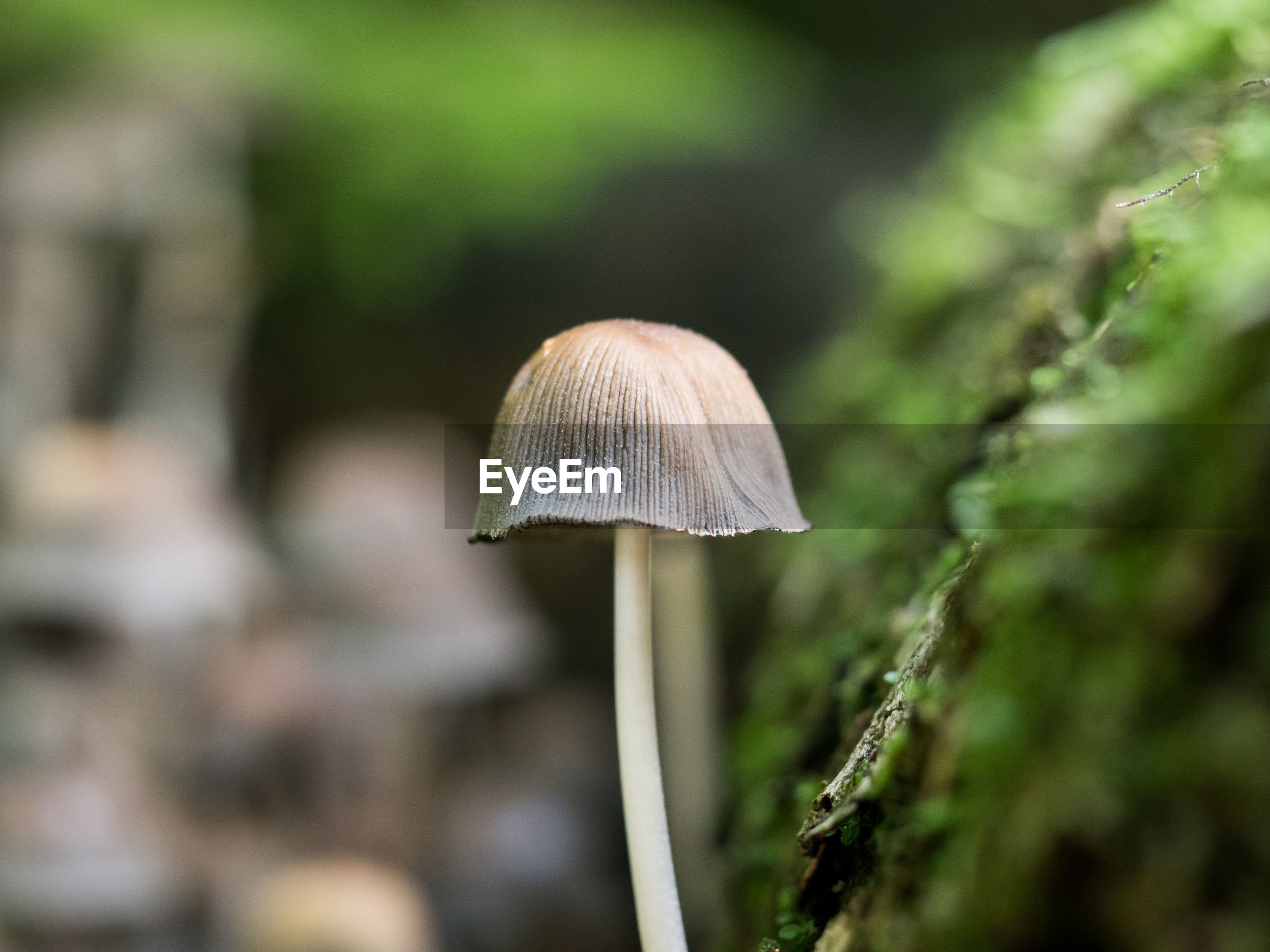 Close-up of mushroom growing on plant
