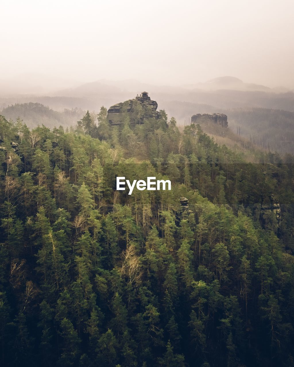 tree, plant, tranquil scene, beauty in nature, tranquility, growth, scenics - nature, green color, no people, environment, day, fog, nature, land, non-urban scene, sky, landscape, forest, high angle view, outdoors