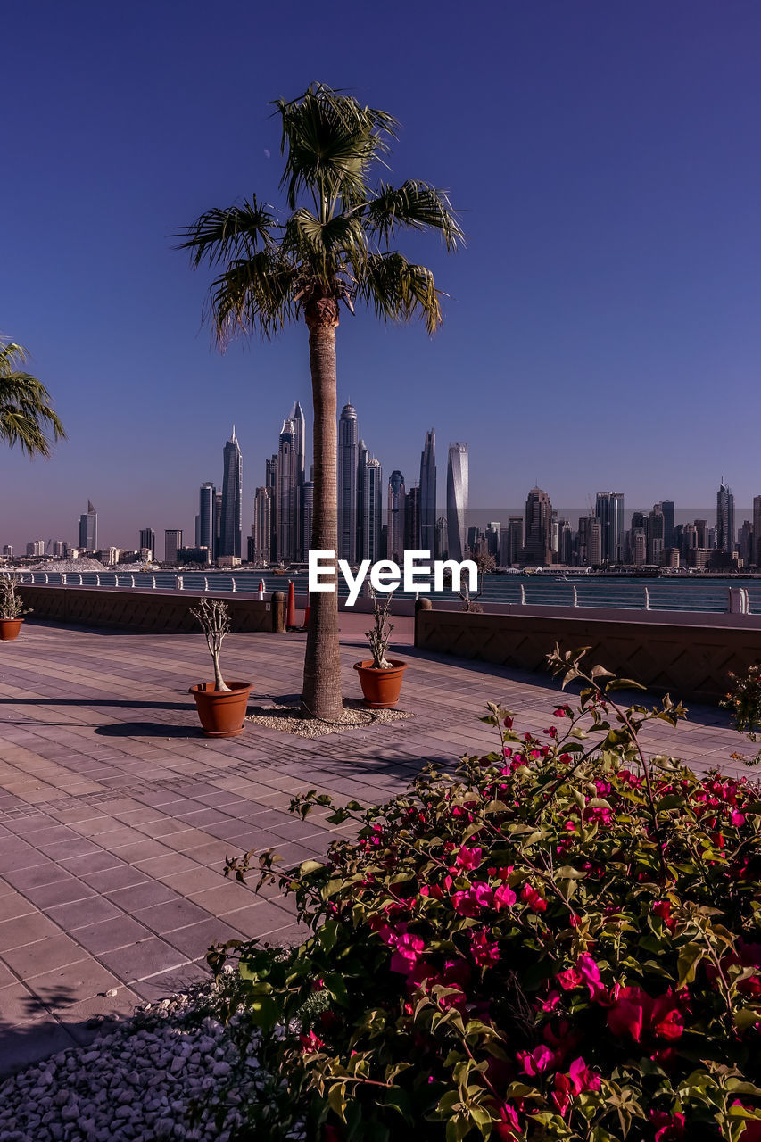 palm tree, growth, tree, water, outdoors, flower, nature, beauty in nature, city, built structure, no people, sky, architecture, building exterior, travel destinations, clear sky, scenics, blue, day, skyscraper, cityscape