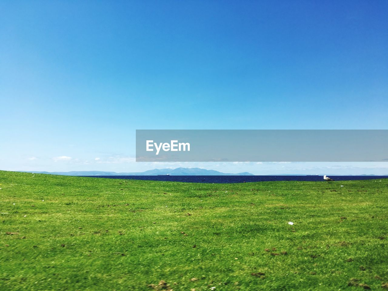grass, field, landscape, nature, tranquility, tranquil scene, scenics, green color, beauty in nature, outdoors, no people, day, horizon over land, blue, sky, growth, clear sky, animal themes, golf course