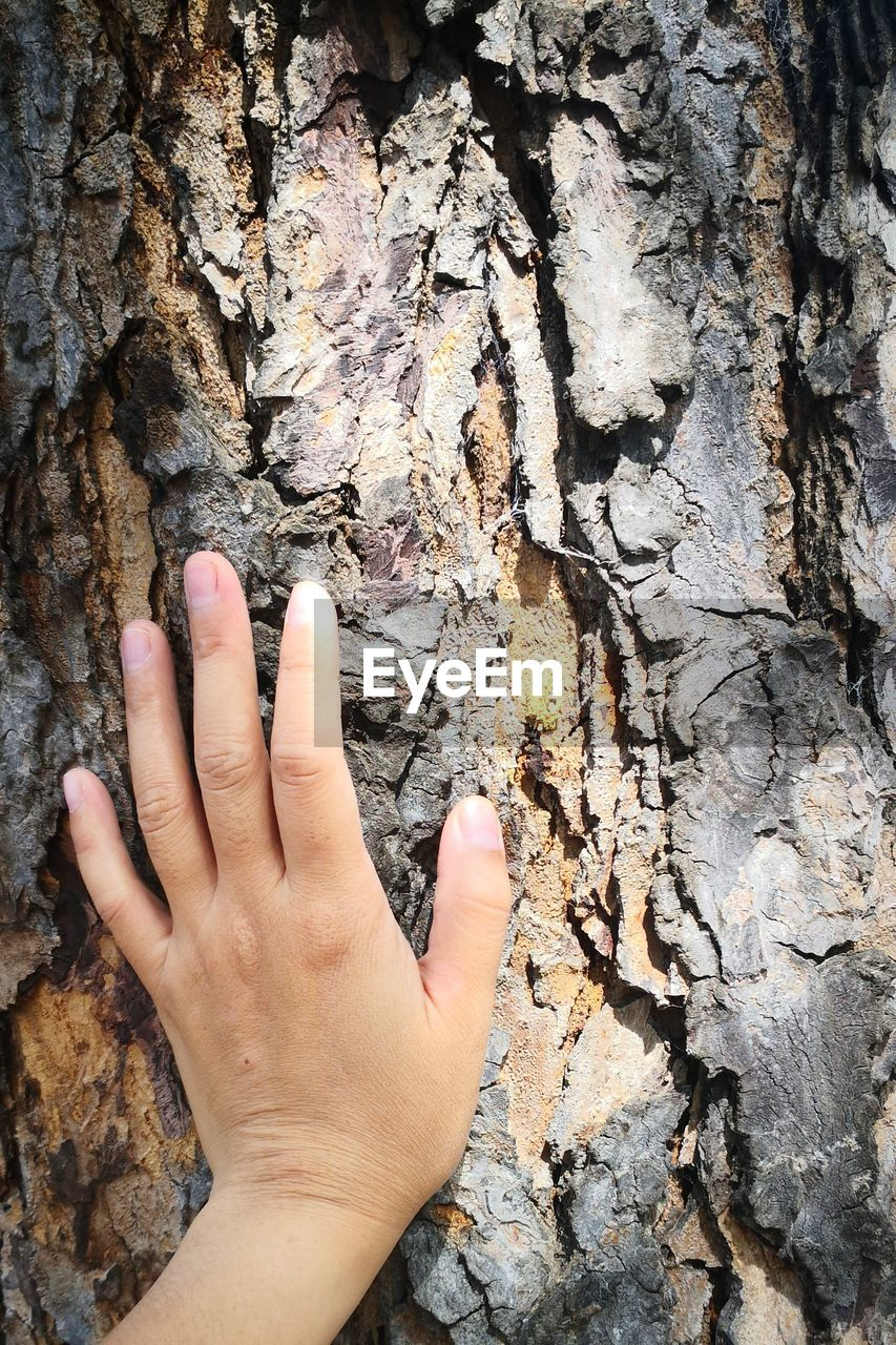 human hand, hand, human body part, real people, one person, tree trunk, body part, trunk, textured, human finger, finger, close-up, unrecognizable person, rock, lifestyles, rough, nature, leisure activity, day, outdoors, bark, human limb