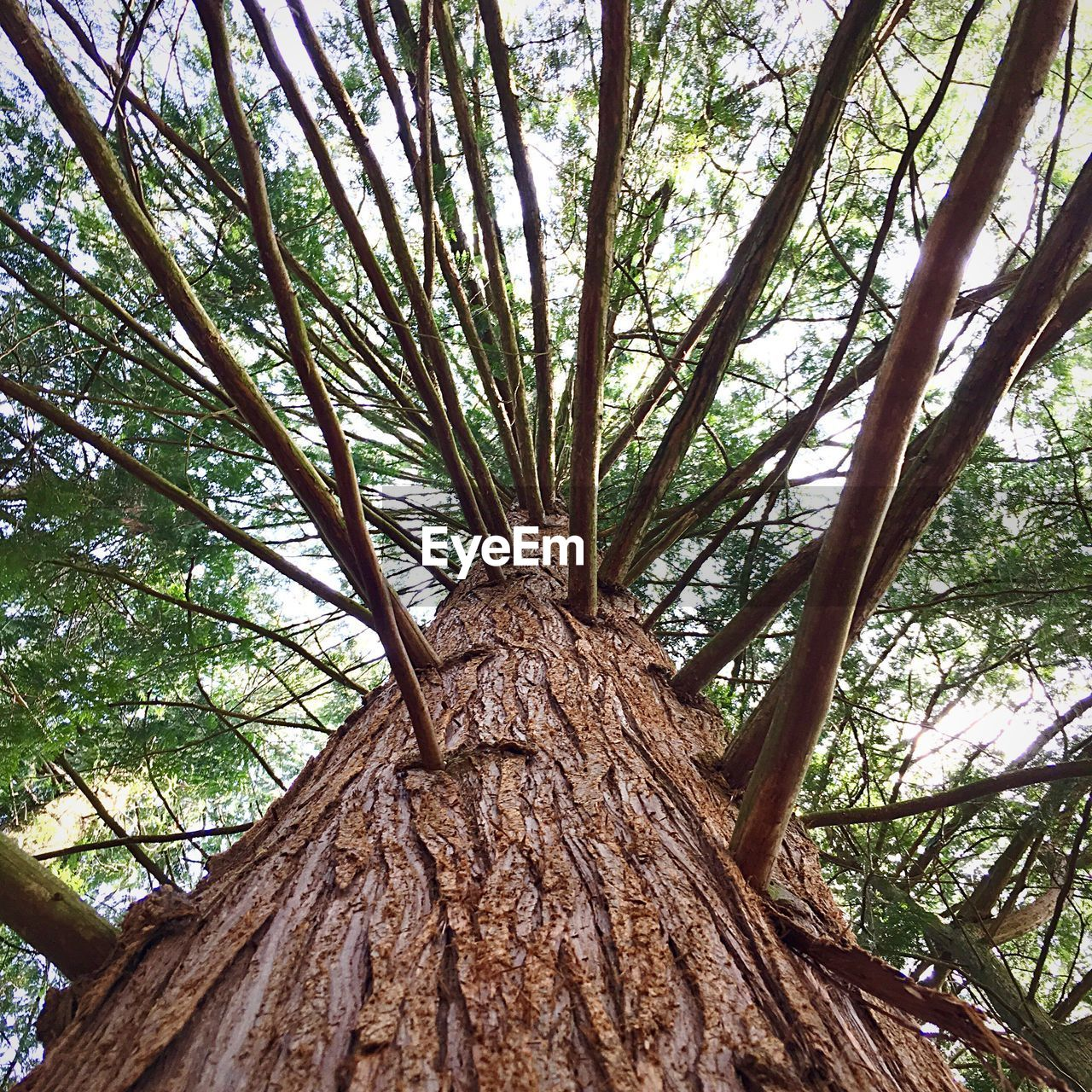 tree, tree trunk, low angle view, nature, growth, day, forest, branch, tranquility, outdoors, textured, no people, beauty in nature, sky, close-up