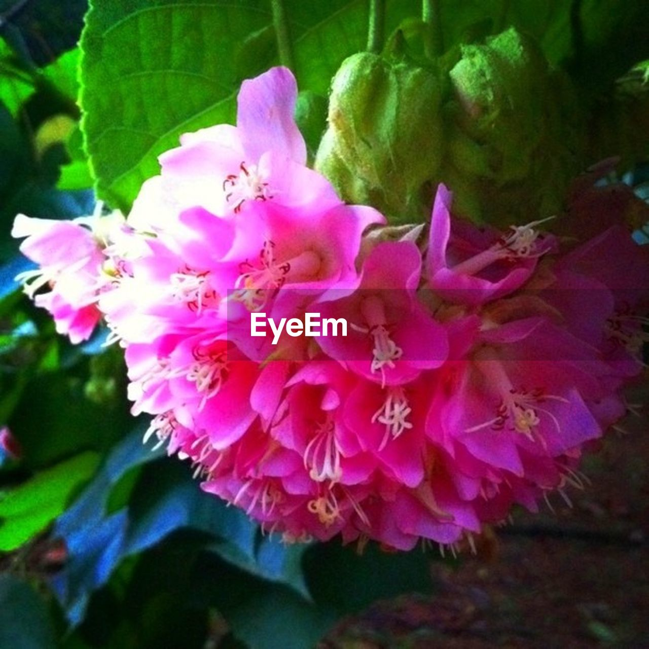 flower, beauty in nature, growth, petal, nature, fragility, pink color, plant, close-up, no people, flower head, freshness, blossom, day, outdoors, blooming