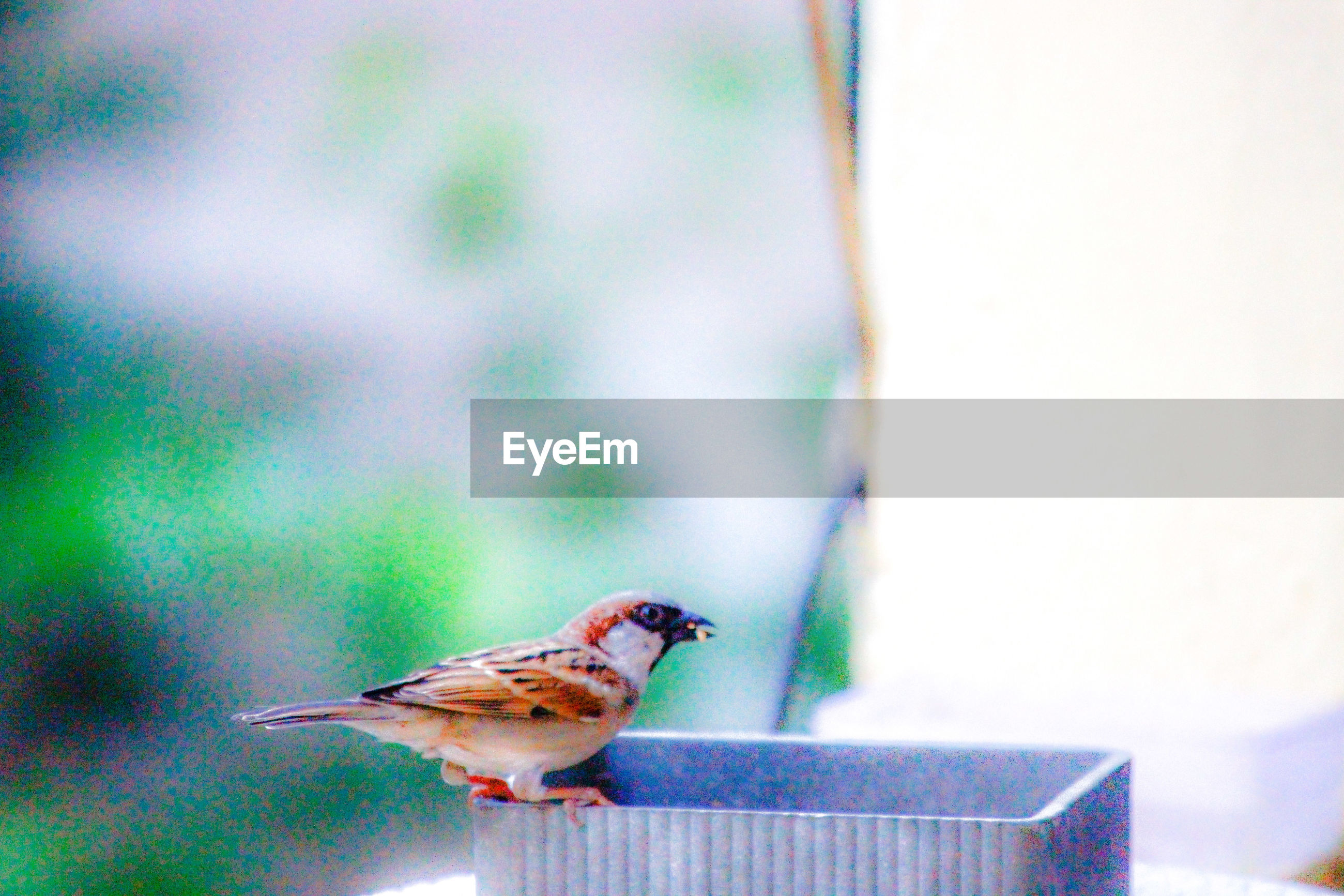 SIDE VIEW OF BIRD PERCHING ON A BLURRED BACKGROUND