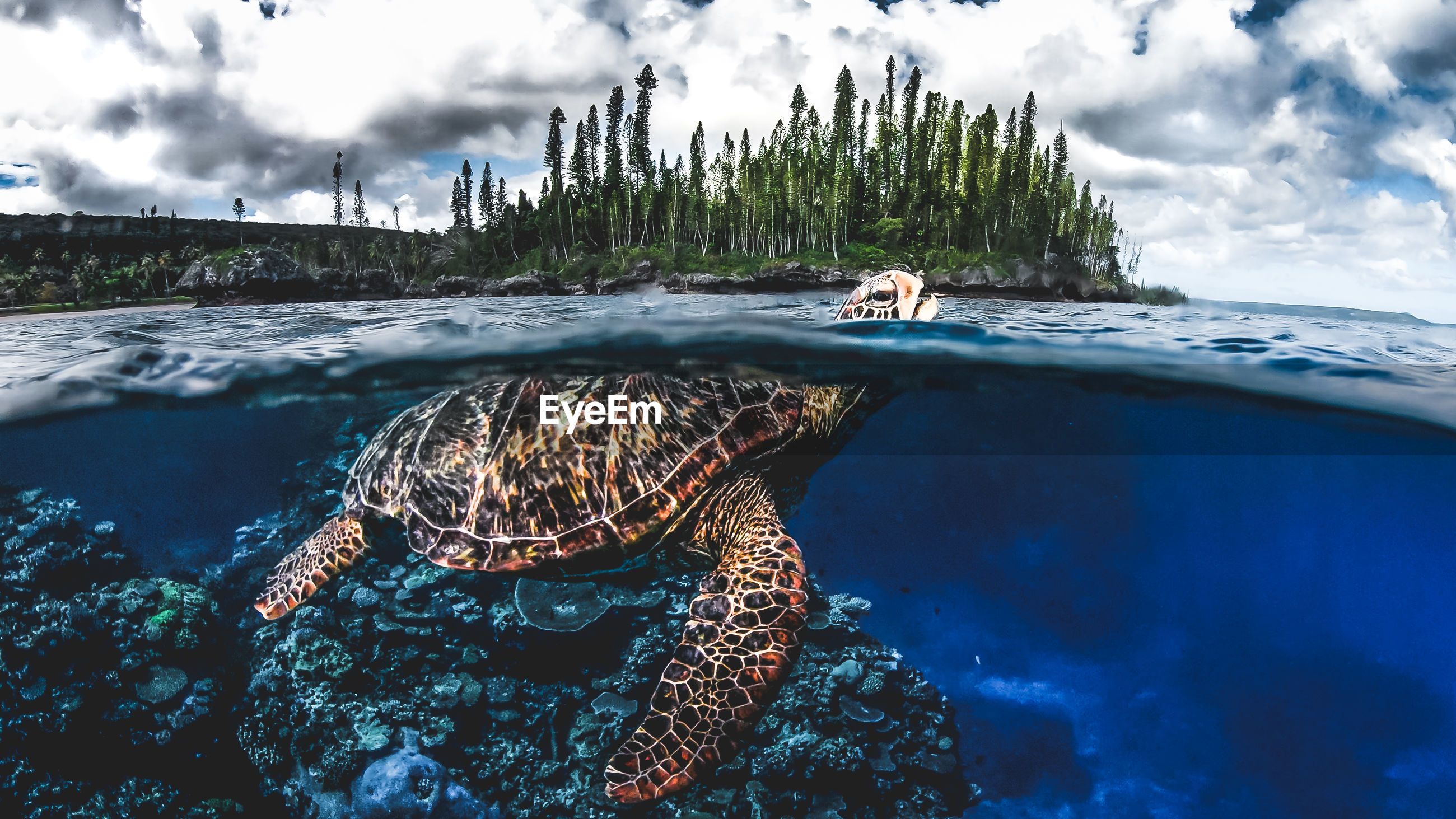 AERIAL VIEW OF SEA TURTLE SWIMMING IN WATER