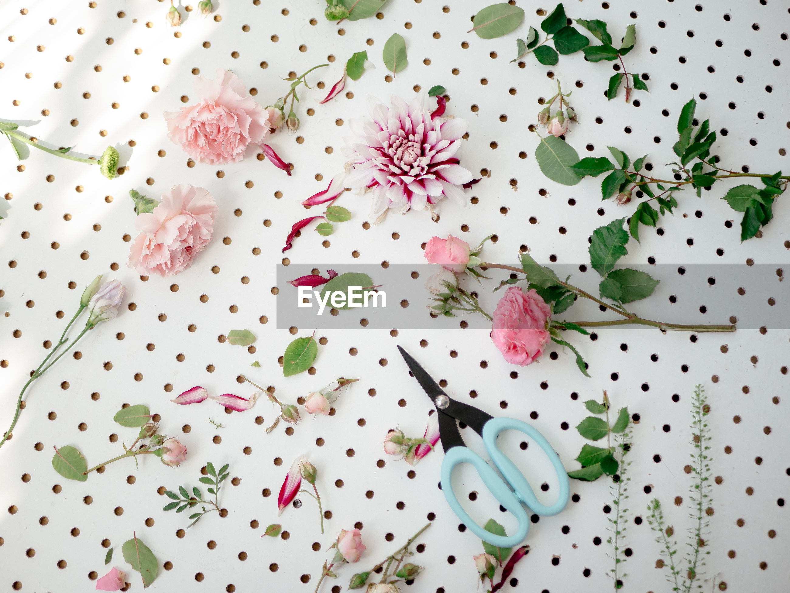 High angle view of pink petals ans scissors on white background