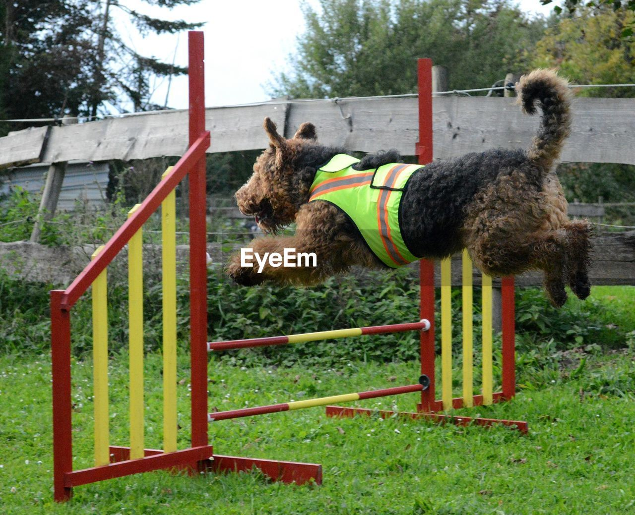 Airedale Terrier Jumping Over Metal Structure At Park