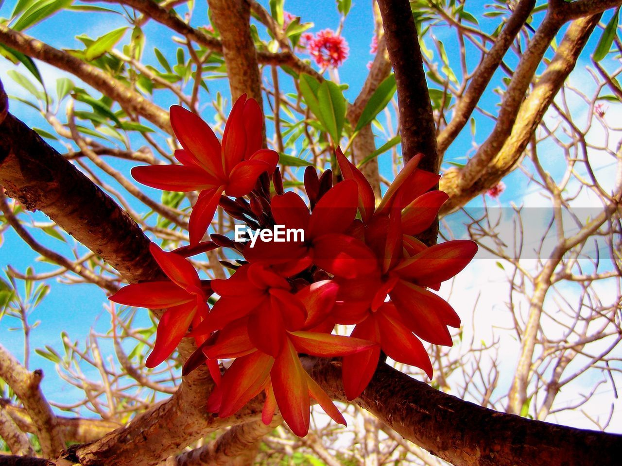 Low angle view of red flowers blooming outdoors