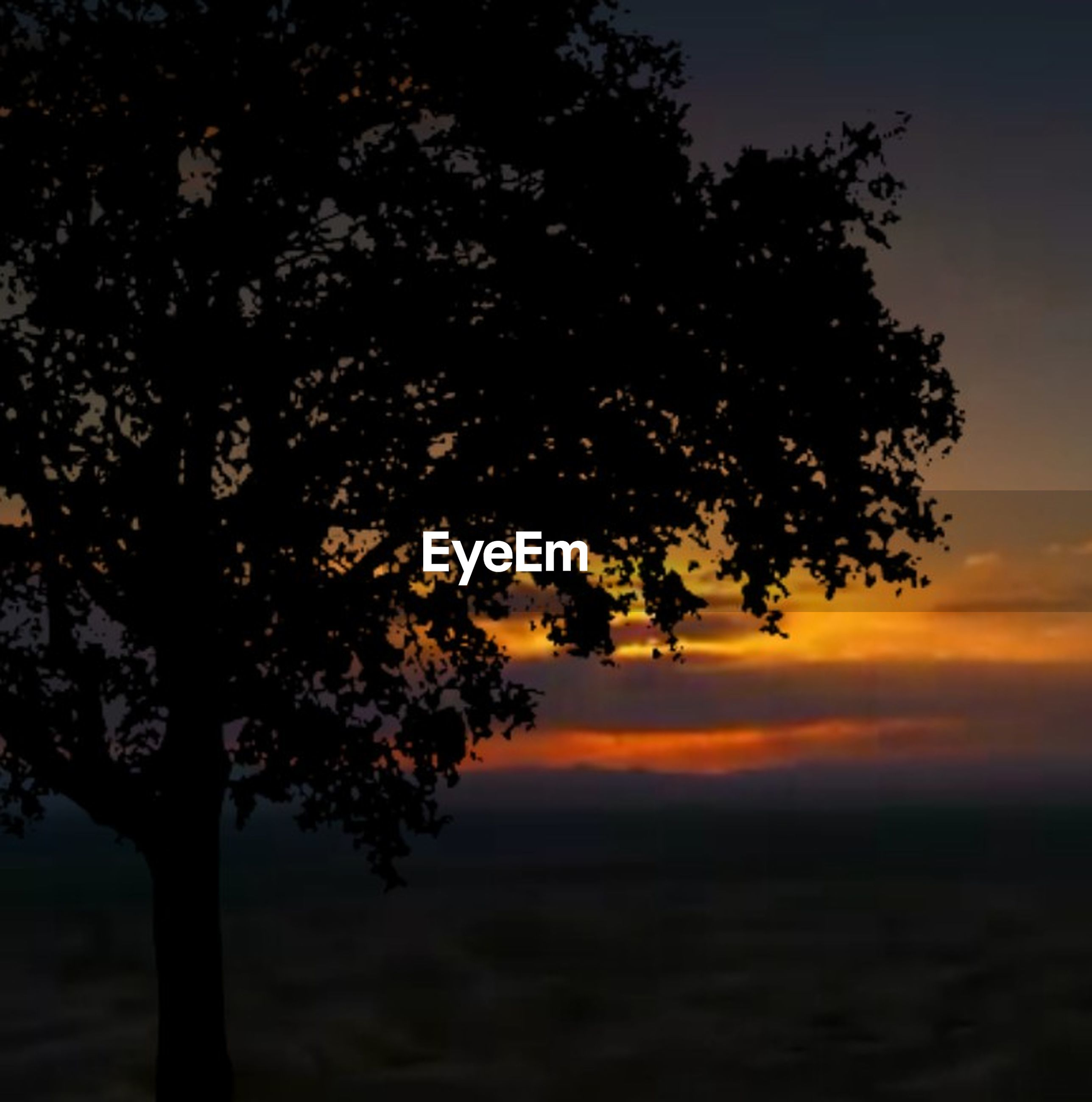 tree, plant, sky, beauty in nature, sunset, growth, tranquility, silhouette, nature, scenics - nature, tranquil scene, orange color, no people, outdoors, branch, idyllic, cloud - sky, non-urban scene, environment, land