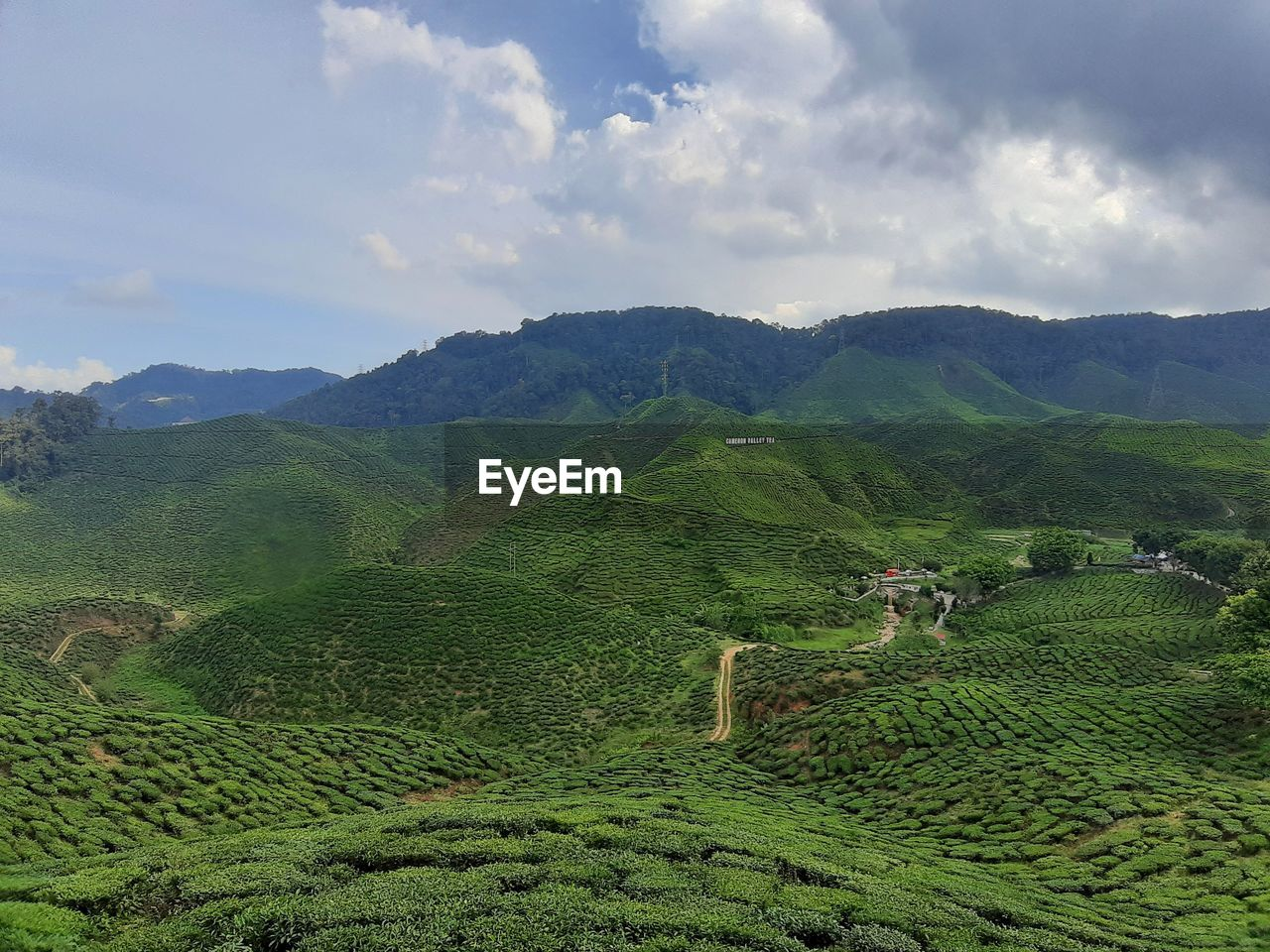 mountain, sky, scenics - nature, beauty in nature, environment, landscape, cloud - sky, plant, agriculture, land, tranquil scene, field, green color, tranquility, growth, rural scene, nature, mountain range, farm, tree, no people, outdoors, tea crop, plantation