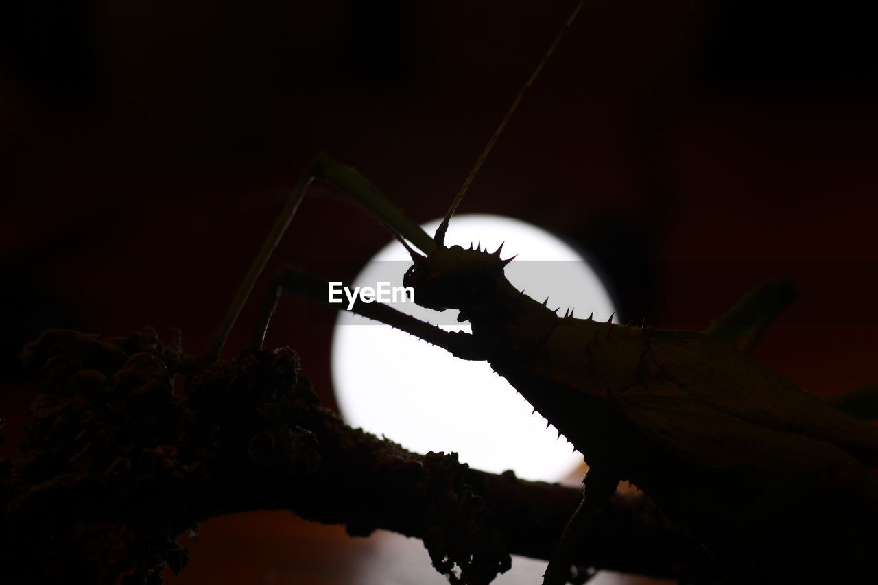 one animal, insect, animal themes, animals in the wild, no people, close-up, animal wildlife, night, outdoors, nature