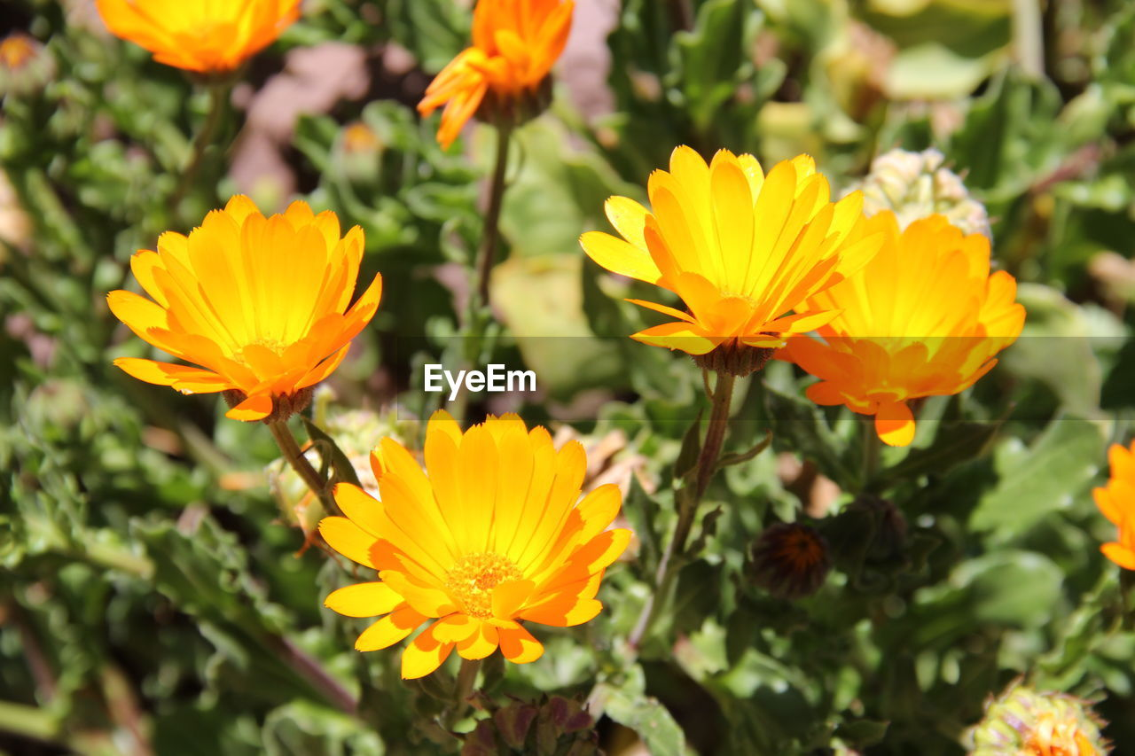 flowering plant, flower, vulnerability, beauty in nature, petal, fragility, plant, freshness, growth, flower head, close-up, inflorescence, yellow, nature, day, no people, outdoors, orange color, focus on foreground, selective focus, gazania, pollen