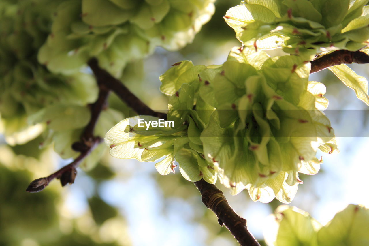 growth, nature, beauty in nature, green color, freshness, day, tree, no people, fragility, flower, outdoors, focus on foreground, close-up, branch, plant, springtime, flower head