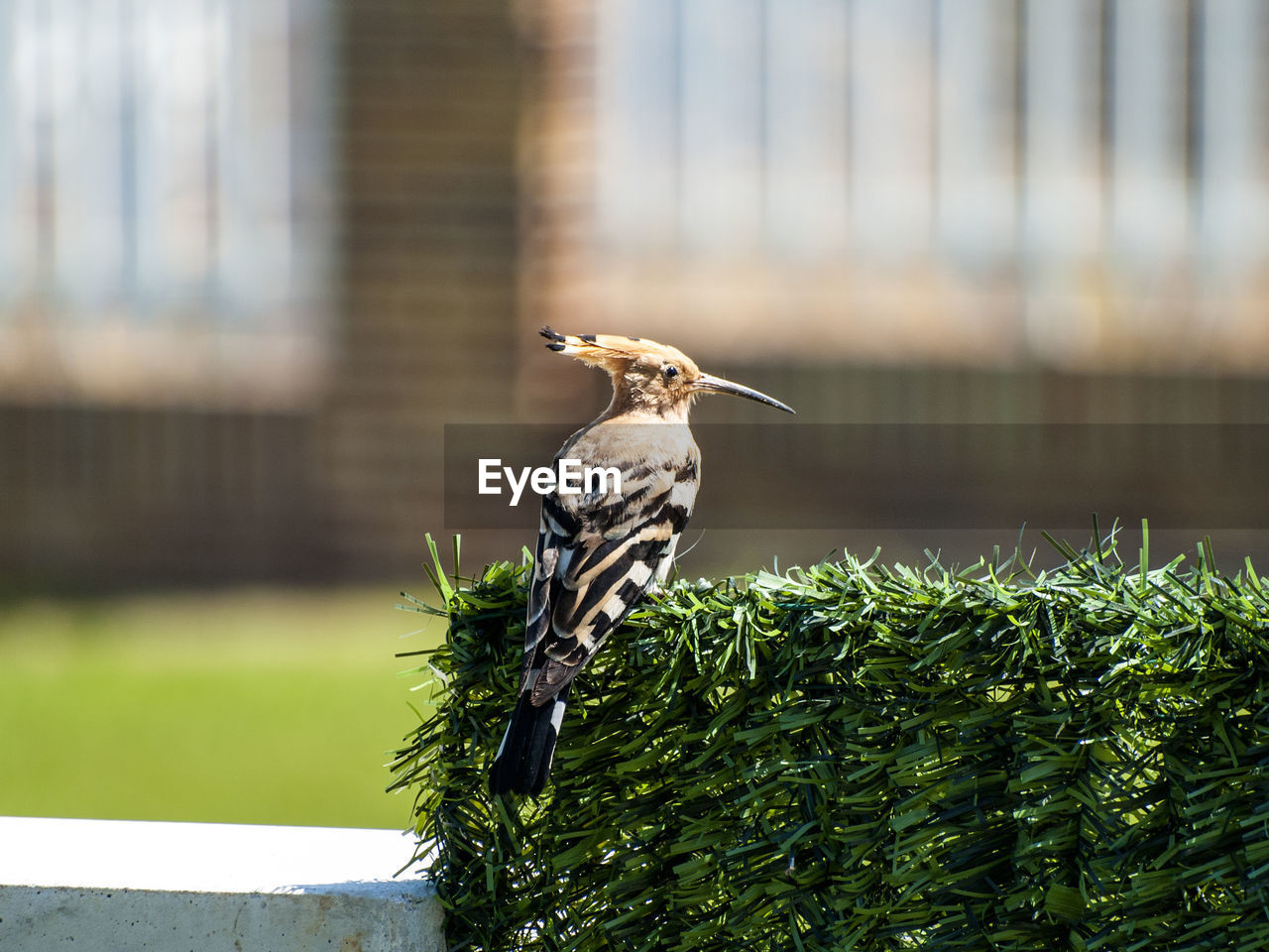one animal, focus on foreground, bird, animal themes, animals in the wild, day, animal wildlife, perching, no people, outdoors, nature, woodpecker, close-up