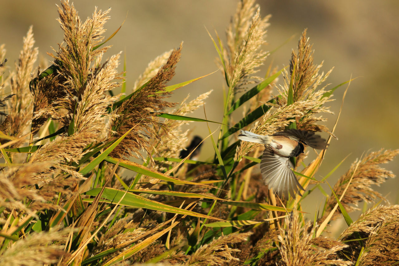 Junco Flying By Plants