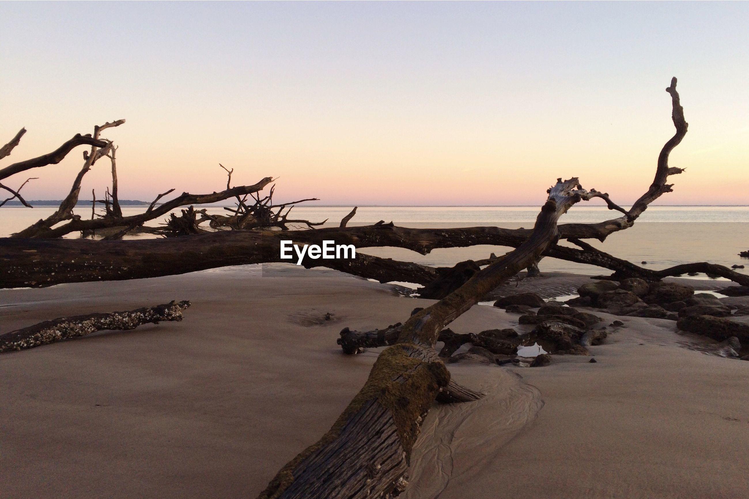 Driftwood on sandy beach
