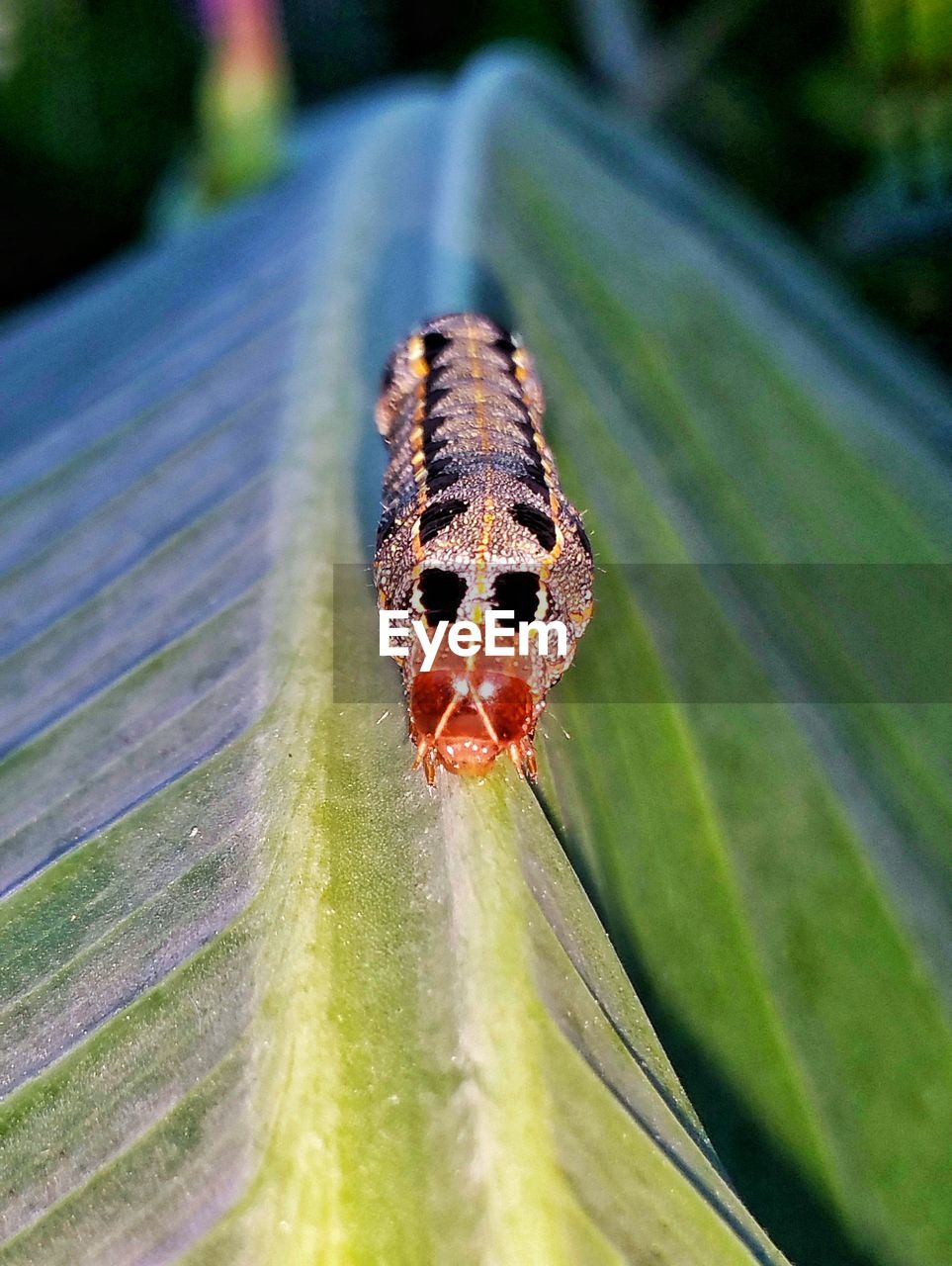 close-up, insect, invertebrate, one animal, animal themes, animal, day, selective focus, animals in the wild, animal wildlife, no people, focus on foreground, plant, plant part, nature, leaf, arthropod, caterpillar, outdoors, spider, butterfly - insect