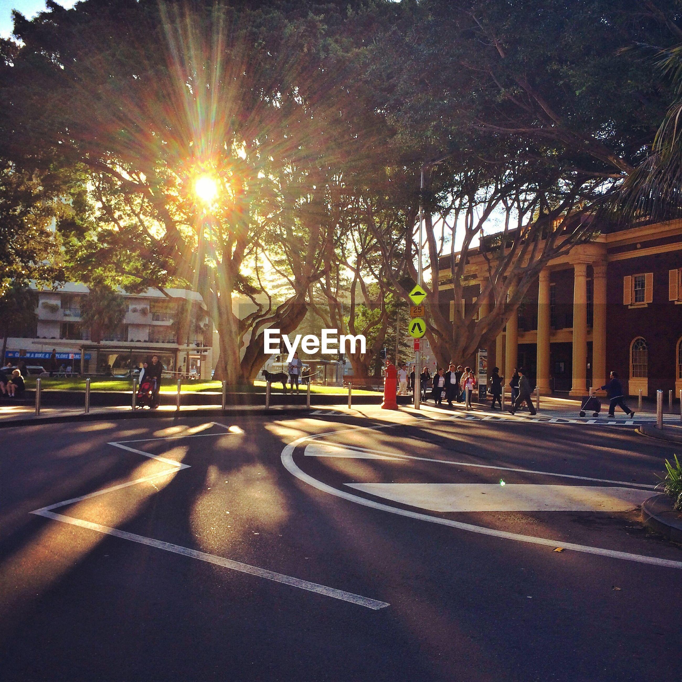 Sun shining through trees by street