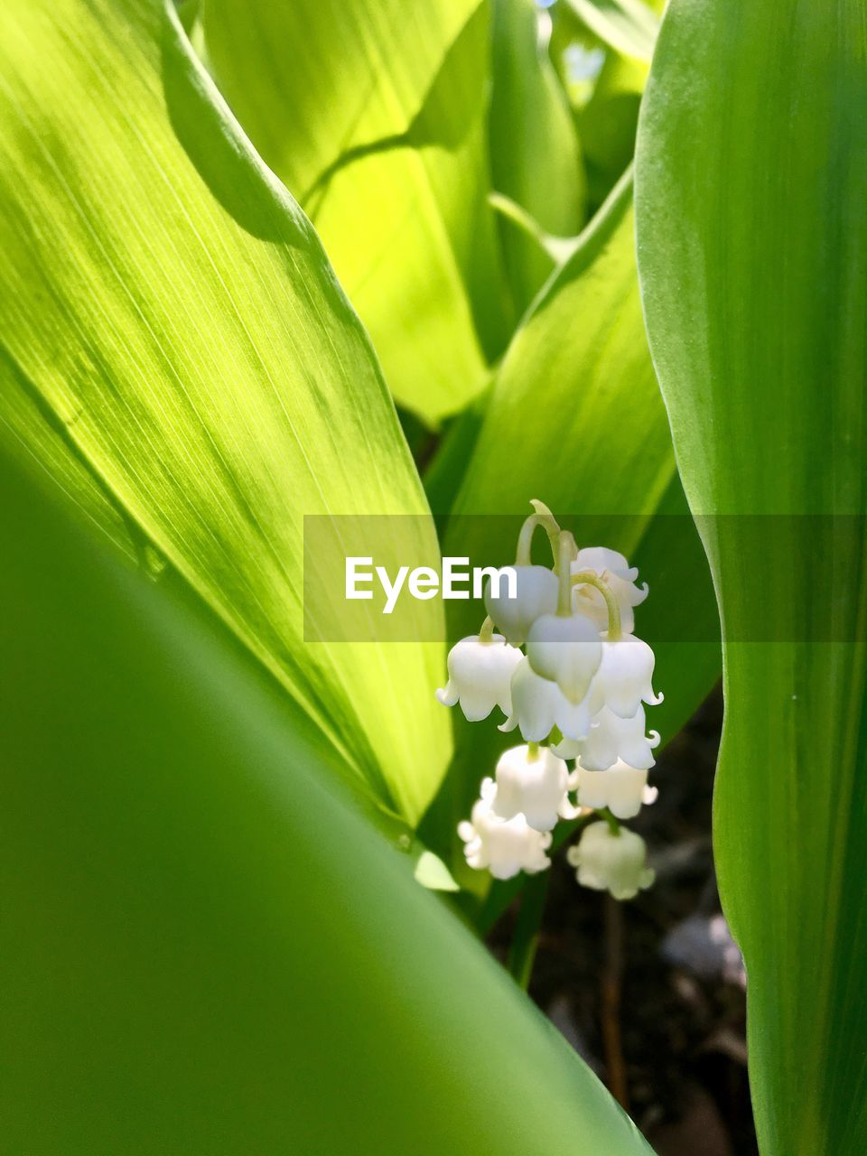 green color, growth, nature, beauty in nature, freshness, no people, plant, flower, close-up, leaf, day, fragility, outdoors, flower head