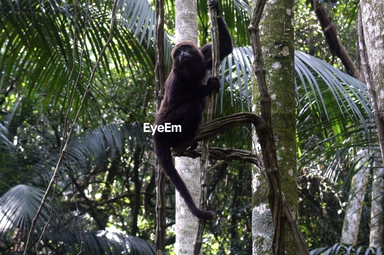 Low angle view of a monkey on tree
