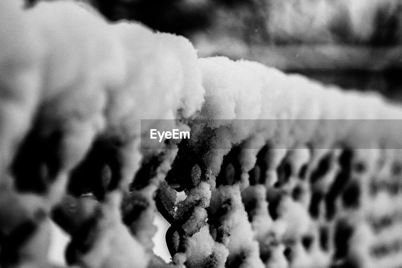 Close-up of snow covered fence