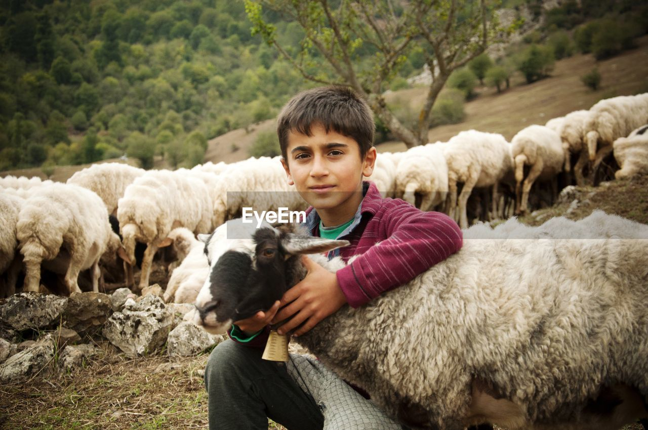mammal, domestic animals, domestic, pets, portrait, livestock, sheep, looking at camera, one person, smiling, group of animals, vertebrate, nature, flock of sheep, day, herbivorous, outdoors