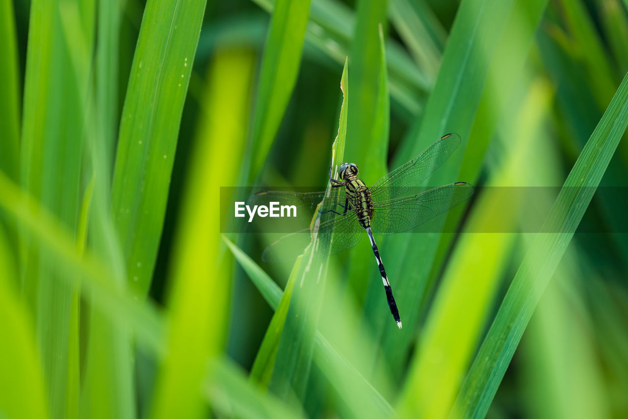 INSECT ON GRASS