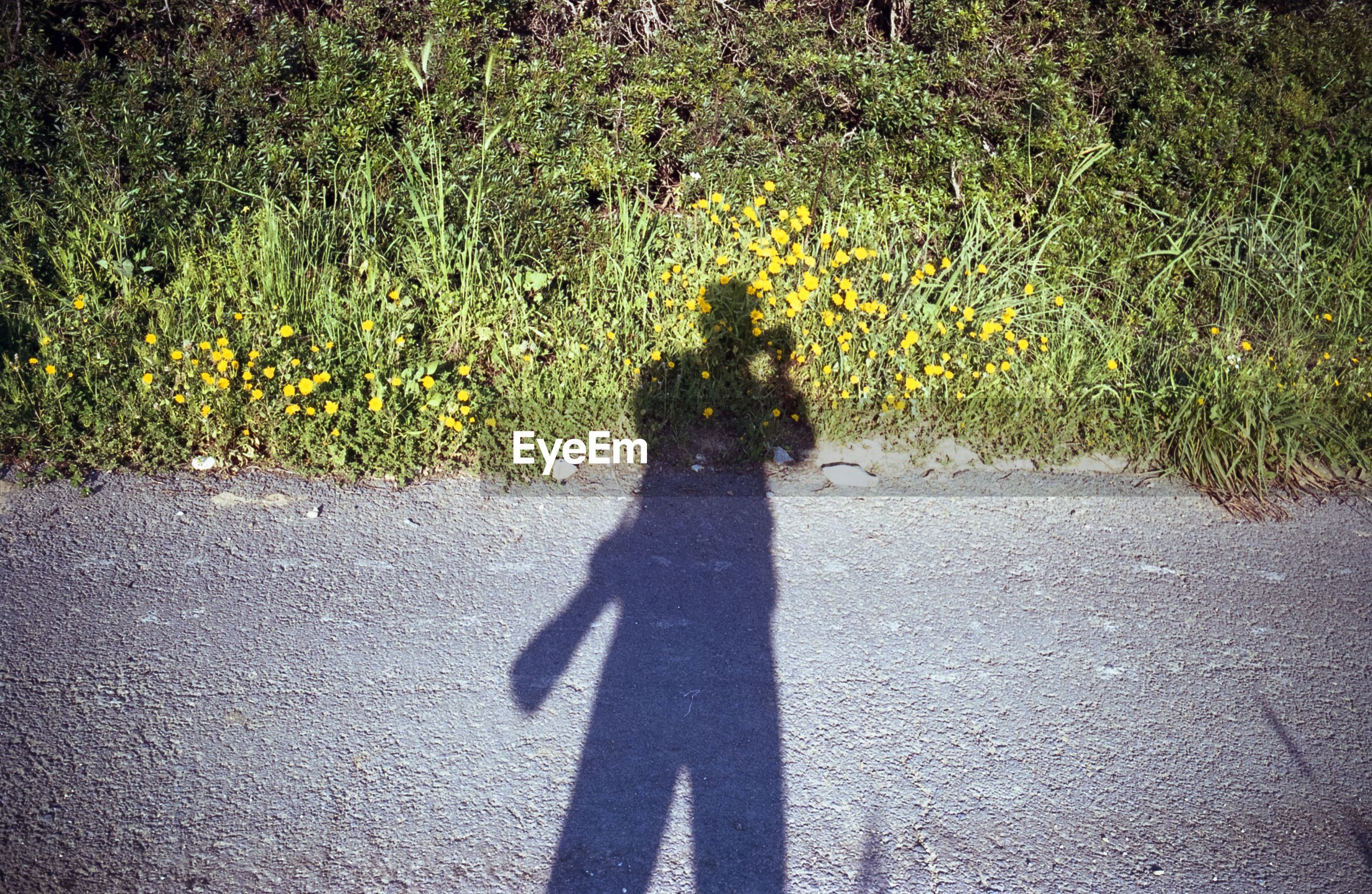 SHADOW OF PERSON ON ROAD BY FLOWERING PLANTS