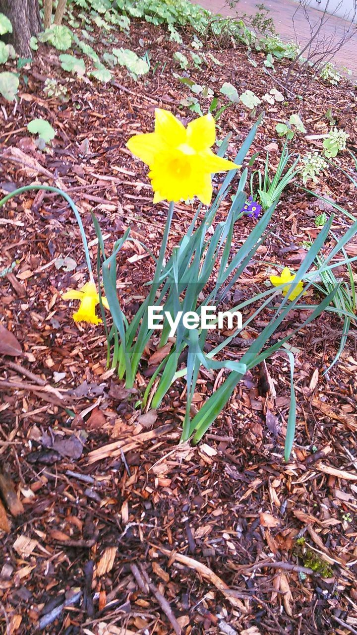 flower, yellow, petal, growth, field, fragility, no people, outdoors, nature, day, freshness, leaf, crocus, plant, flower head, beauty in nature, blooming, close-up
