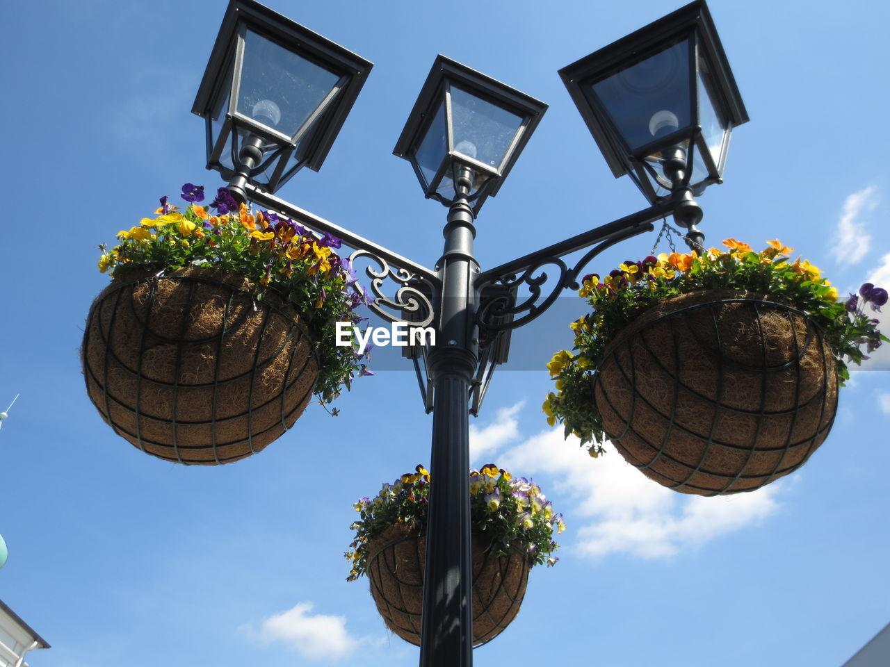 sky, low angle view, street light, street, lighting equipment, plant, nature, no people, flower, day, flowering plant, outdoors, cloud - sky, decoration, architecture, sunlight, tree, sphere, pole, built structure, electric lamp