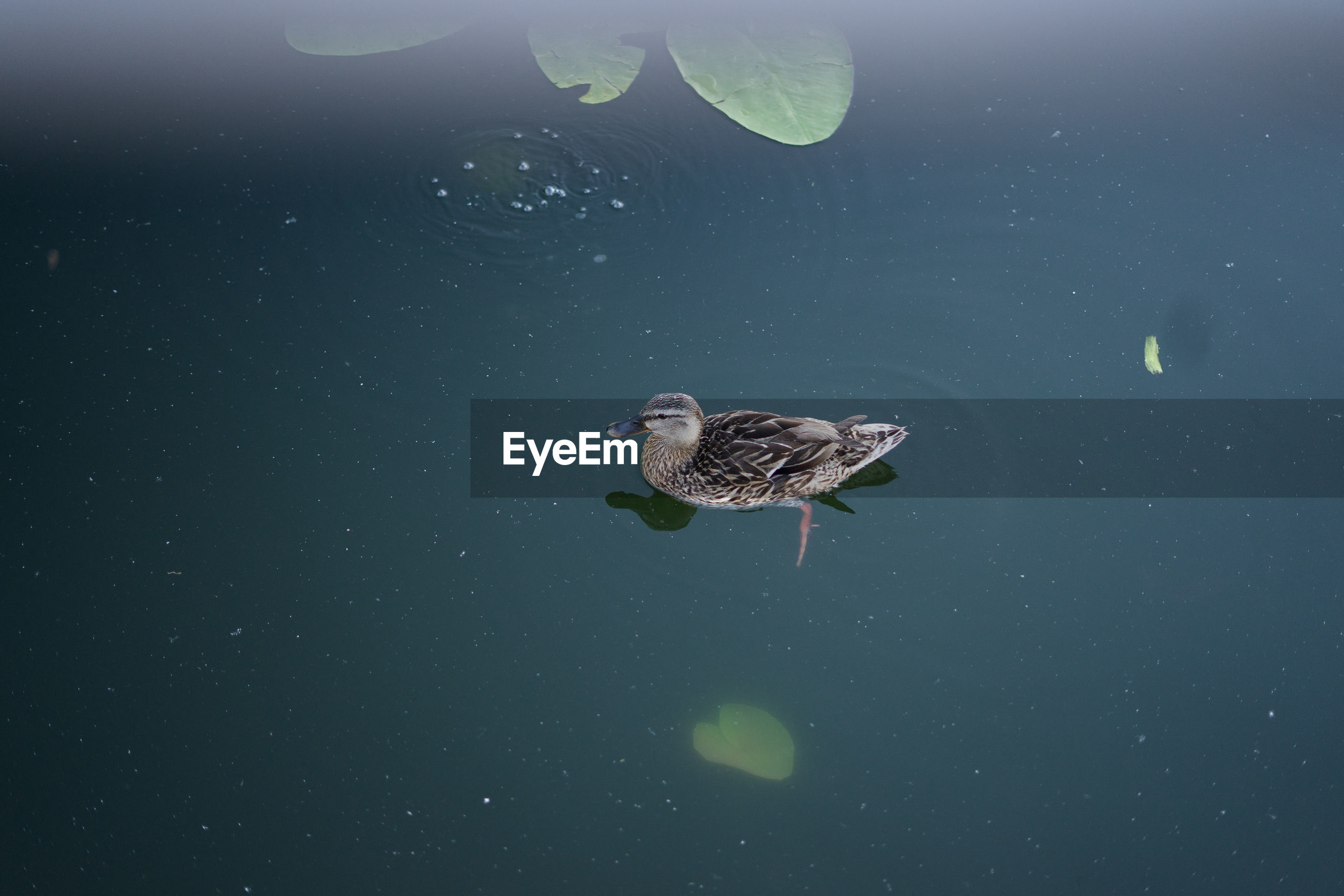 HIGH ANGLE VIEW OF A BIRD IN WATER