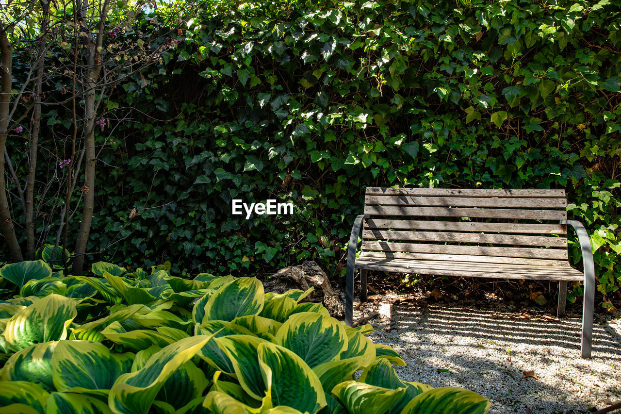 plant, seat, nature, bench, growth, day, green color, beauty in nature, plant part, absence, park, no people, leaf, tree, park bench, tranquility, sunlight, outdoors, garden, land, flowerbed