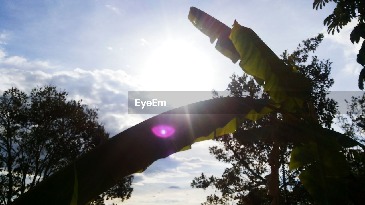 LOW ANGLE VIEW OF HAND AGAINST SKY AND TREES