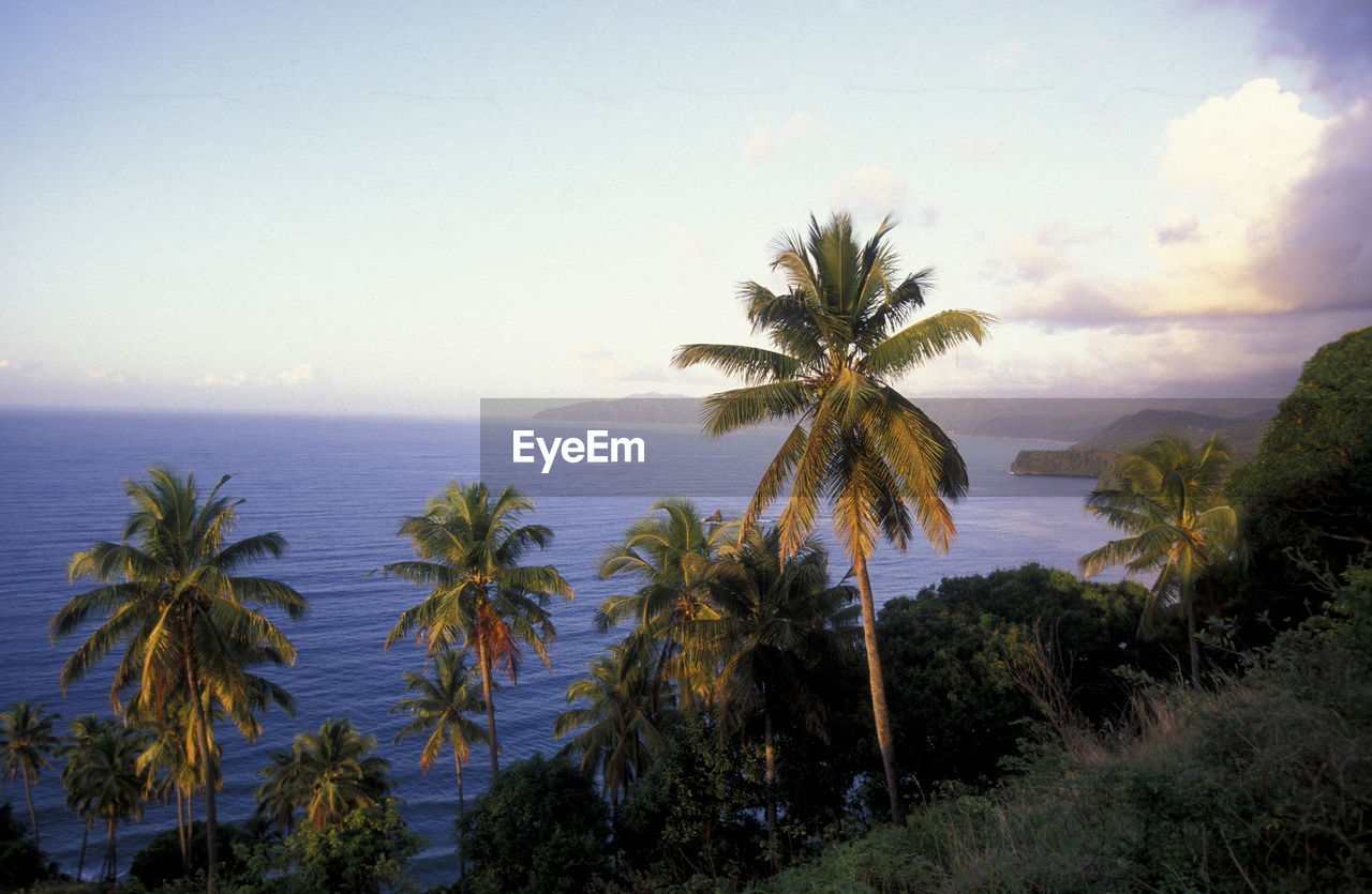 High Angle View Of Palm Trees By Sea Against Sky
