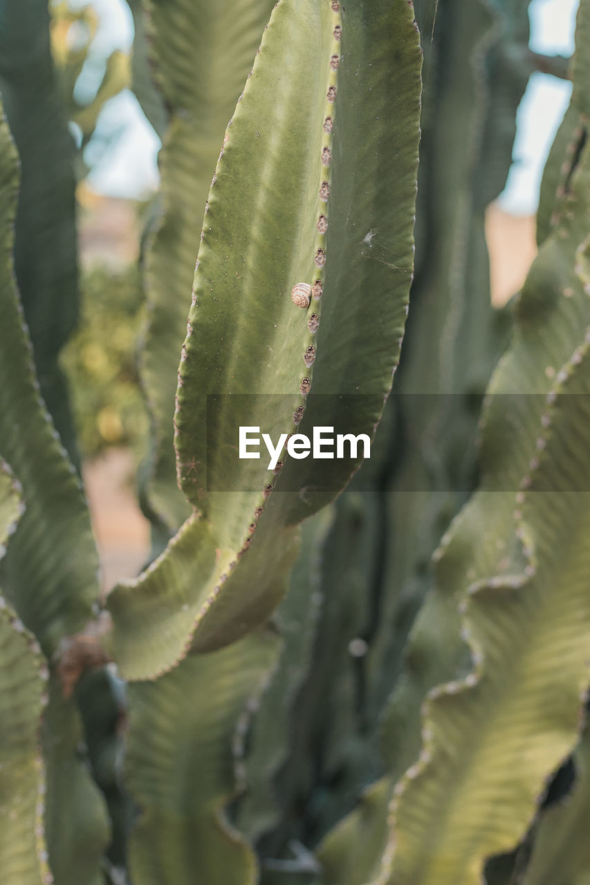 growth, plant, leaf, green color, close-up, plant part, beauty in nature, no people, succulent plant, nature, day, selective focus, cactus, thorn, spiked, focus on foreground, natural pattern, outdoors, full frame, pattern, spiky