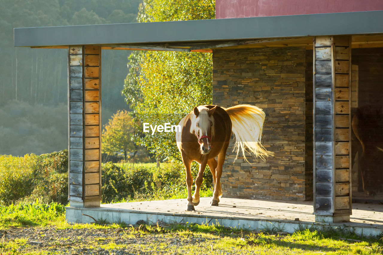 Horse Standing On Porch At Chalet