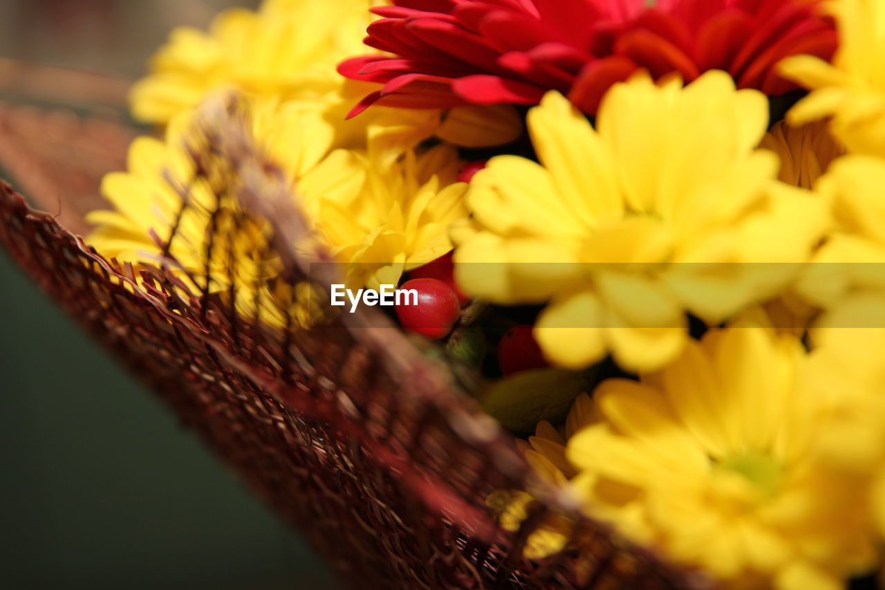 flower, petal, fragility, yellow, beauty in nature, freshness, selective focus, close-up, flower head, nature, no people, outdoors, day