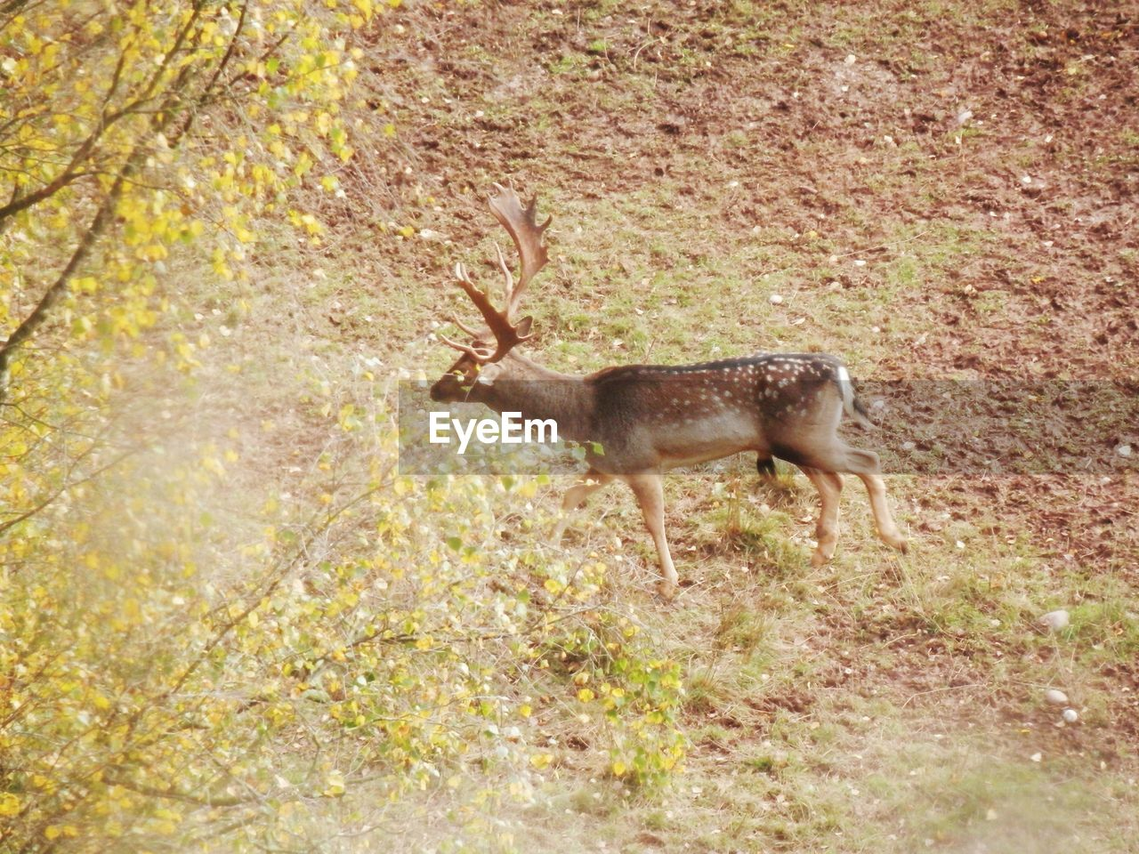 one animal, animals in the wild, animal wildlife, animal themes, antler, no people, nature, outdoors, day, full length, stag, mammal, grass