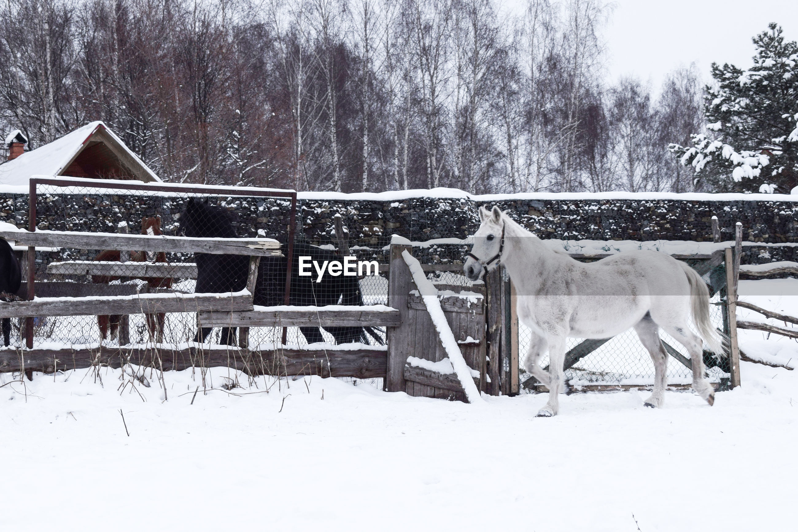 Horse standing on snow covered land