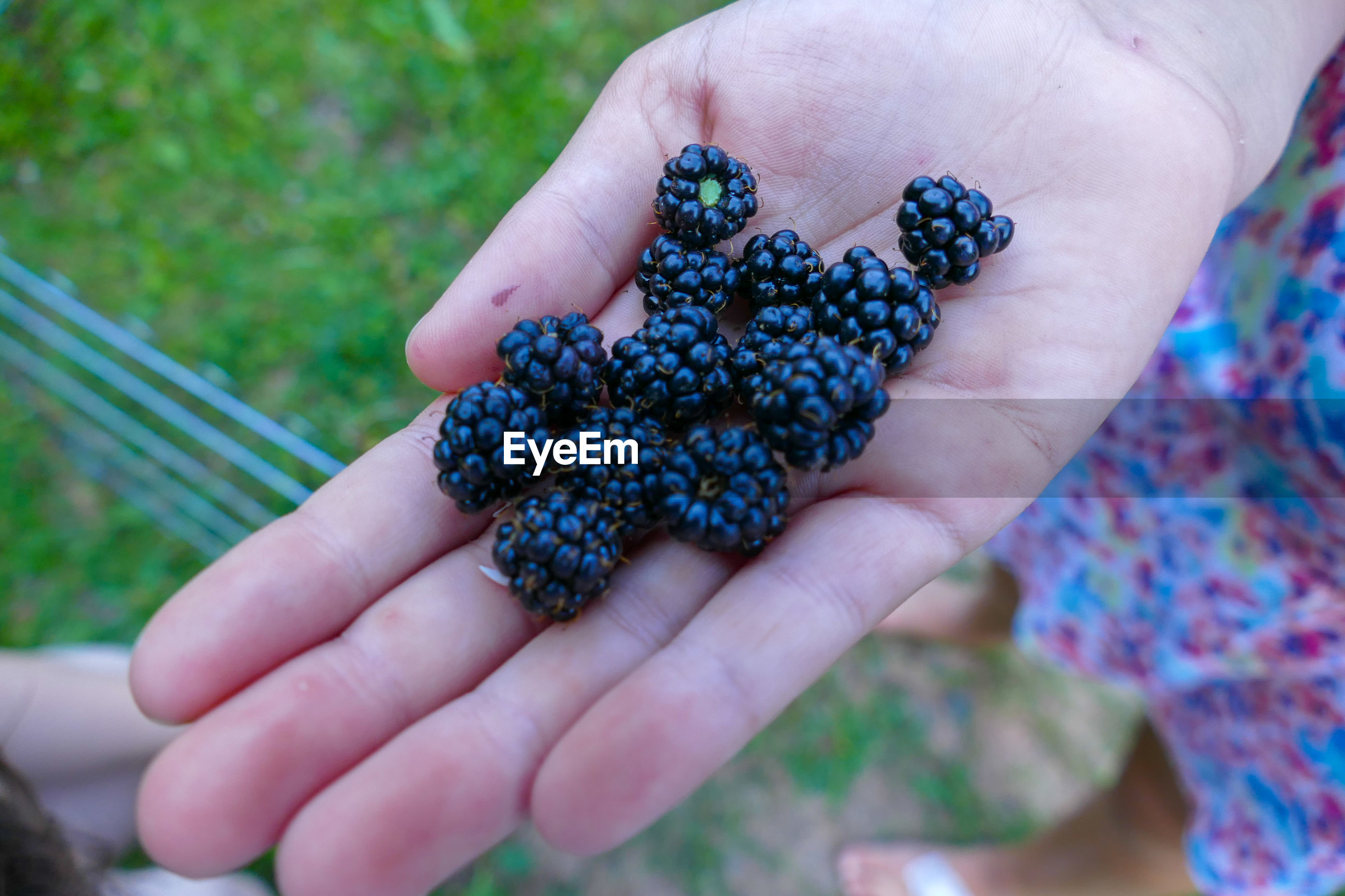 Close-up of hand holding blackberries