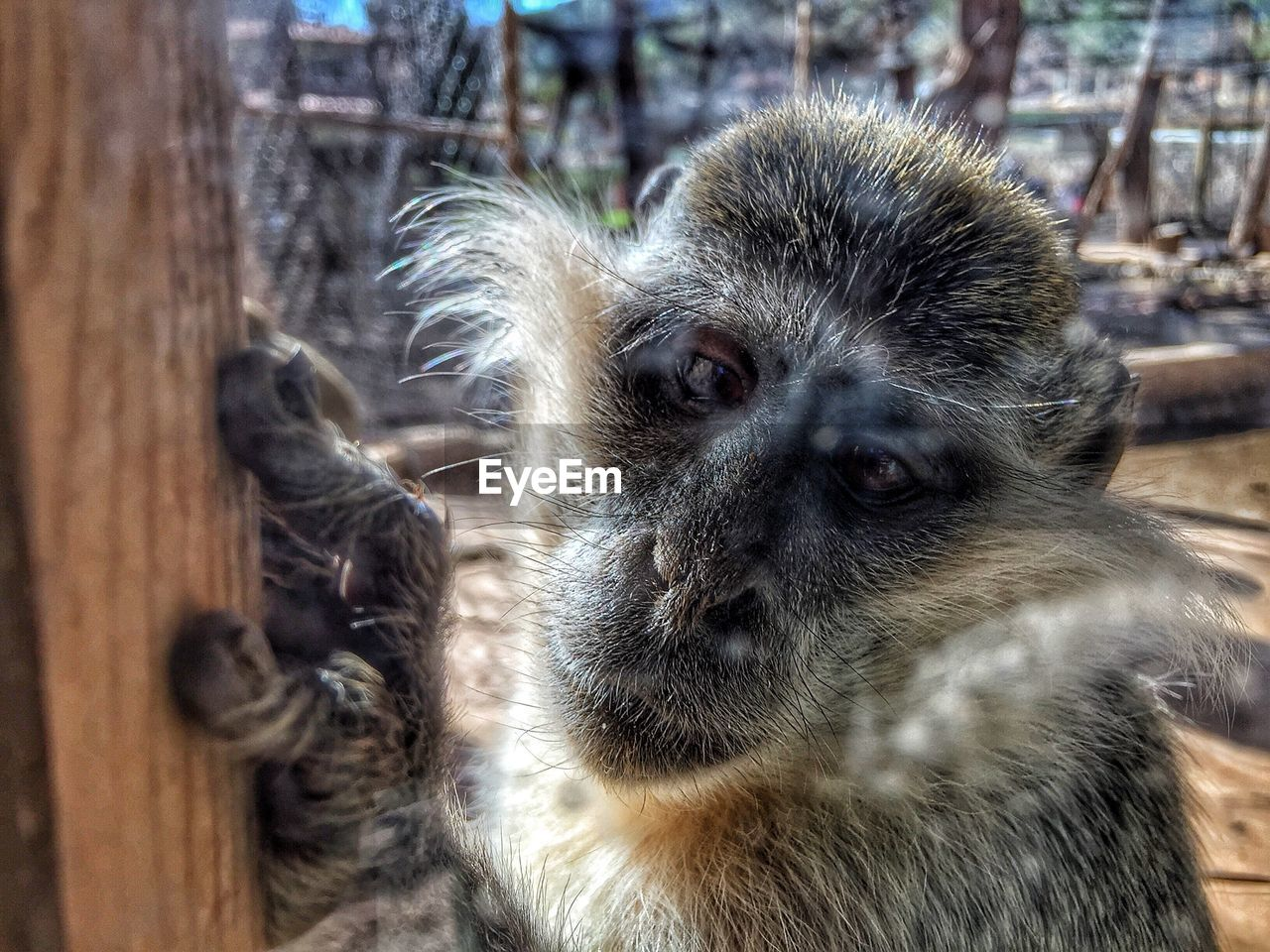 animal themes, animal, primate, monkey, mammal, animal wildlife, animals in the wild, one animal, close-up, day, no people, focus on foreground, vertebrate, zoo, looking, portrait, outdoors, looking away, animals in captivity, animal body part, animal head, baboon