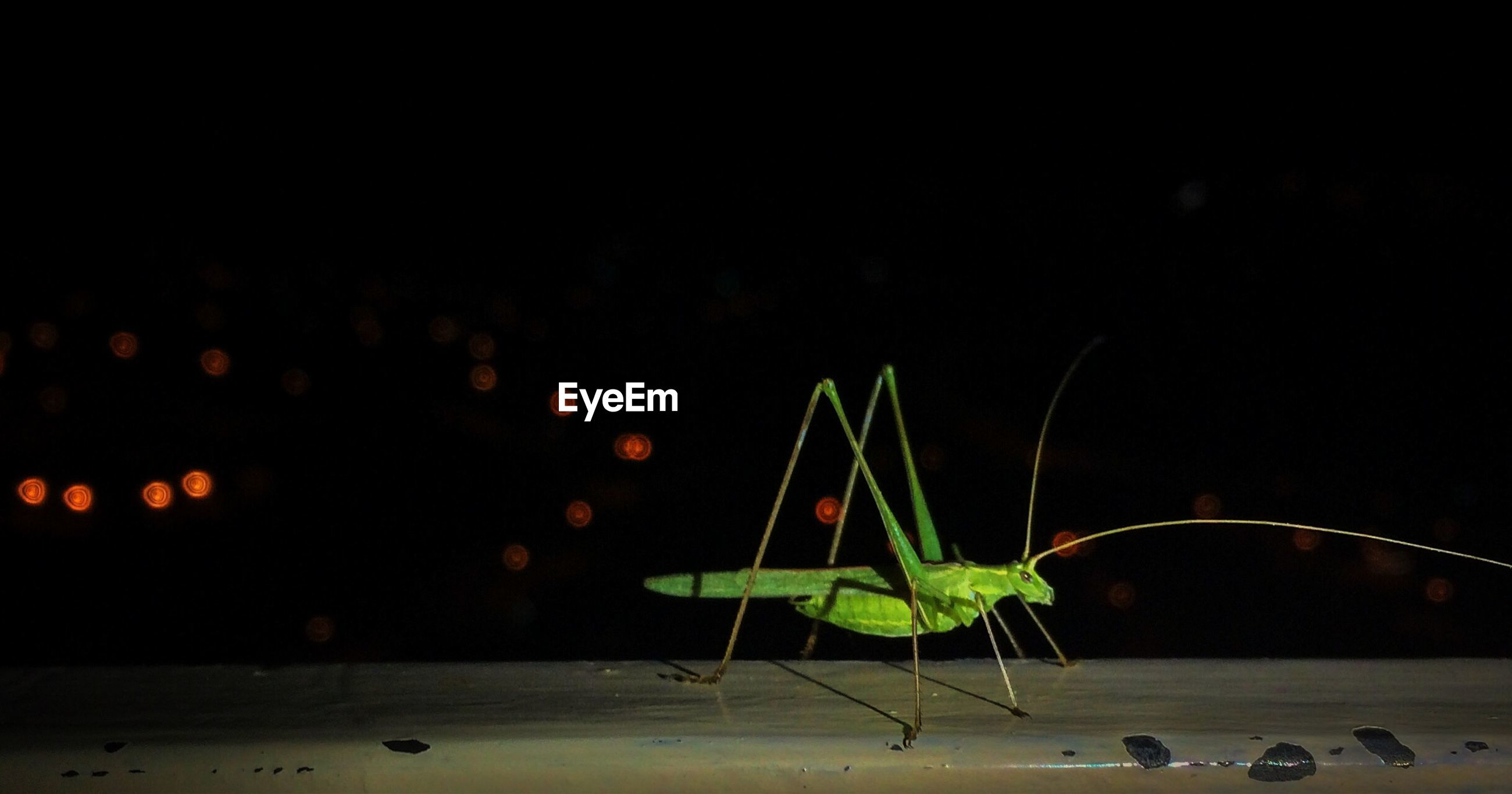 Side view of insect against blurred background