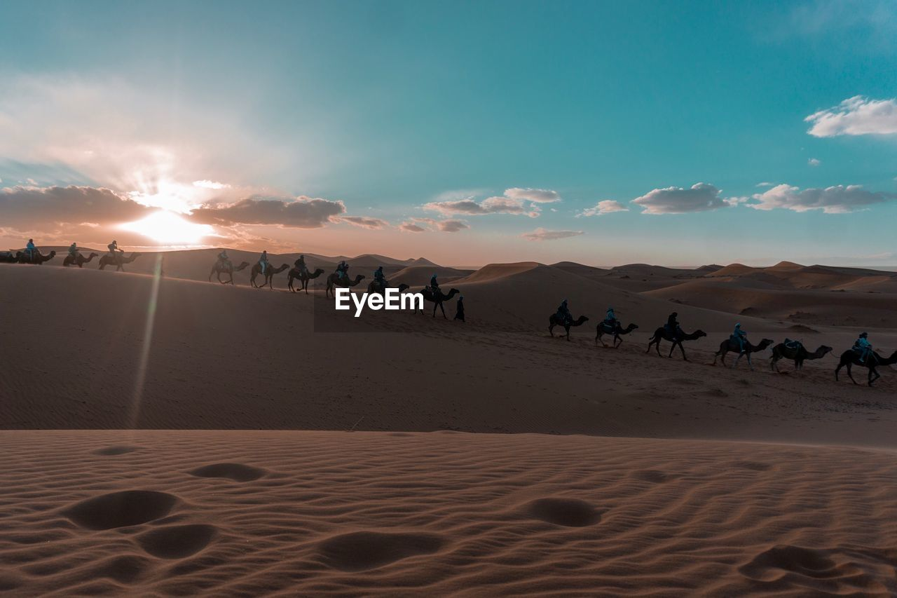 sand, sky, land, group of animals, animal themes, animal, sand dune, scenics - nature, domestic animals, mammal, beauty in nature, nature, pets, domestic, environment, sunset, non-urban scene, desert, sunlight, cloud - sky, arid climate, climate, outdoors