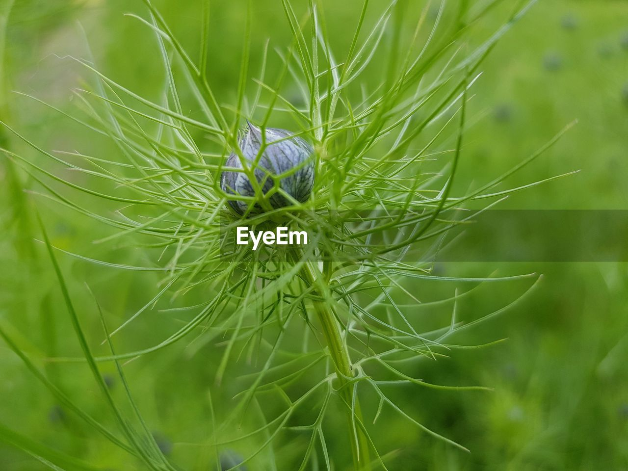 plant, green color, close-up, growth, nature, selective focus, day, no people, one animal, animals in the wild, beauty in nature, animal wildlife, focus on foreground, animal themes, animal, invertebrate, outdoors, fragility, insect, vulnerability