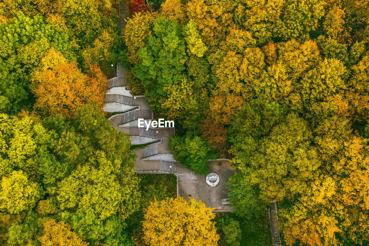 Aerial view of trees growing in park