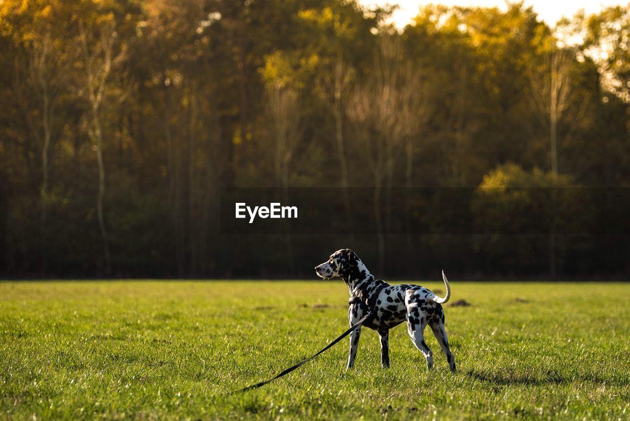Dog On Landscape