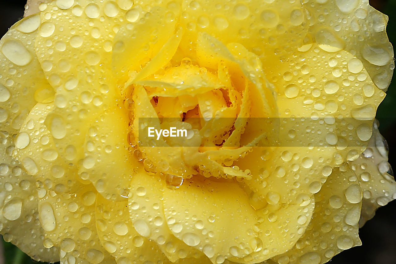 full frame, backgrounds, yellow, no people, freshness, close-up, food, indoors, nature, day