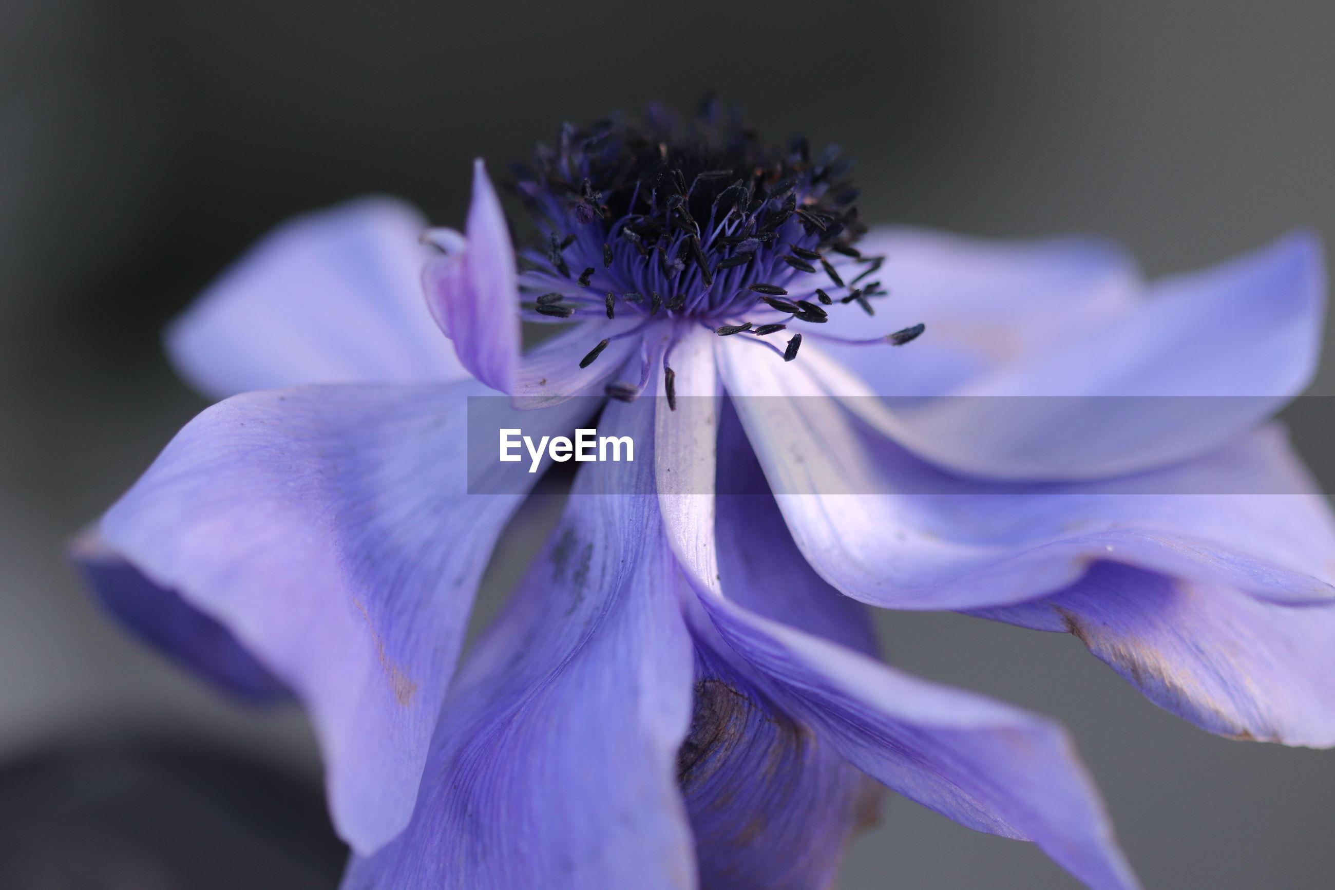 CLOSE-UP OF PURPLE FLOWER HEAD