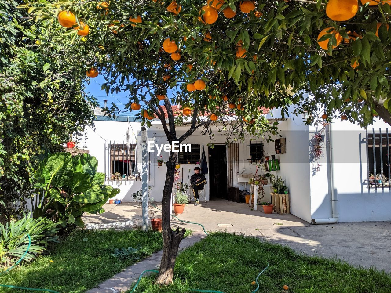 plant, tree, growth, building exterior, built structure, architecture, nature, citrus fruit, day, building, fruit tree, fruit, orange, orange color, orange tree, orange - fruit, no people, city, footpath, outdoors